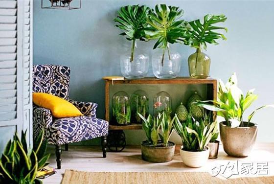 新年行大运!选对家居植物改善居家风水