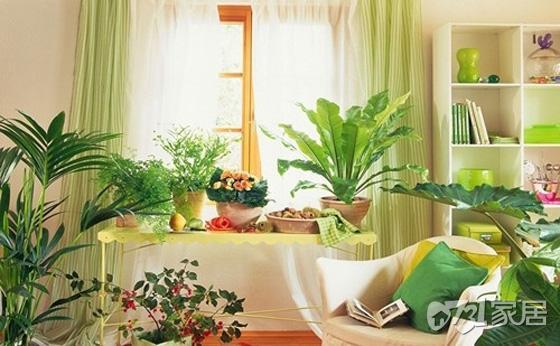 家居风水植物主要作用 养好植物提旺家人运气缔造家居新起点