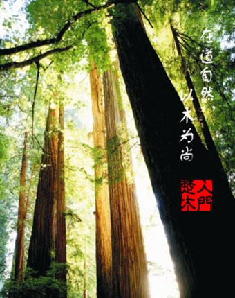 楚人木门原木烤漆木门 进口优质木材;环保家具木器漆;零污染